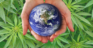 Hemp_Bioremediation